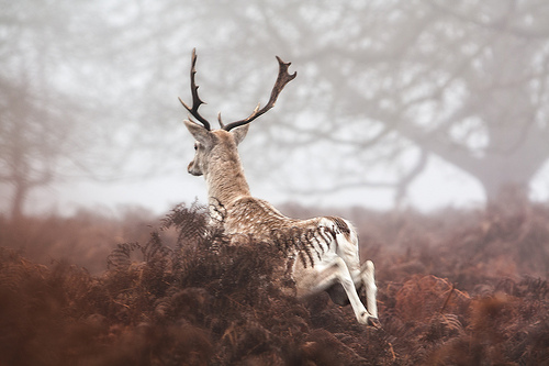 animal-animals-cute-deer-fashion-favim-com-411283