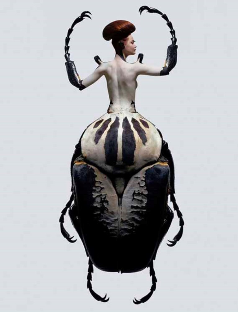 lady-insects-3