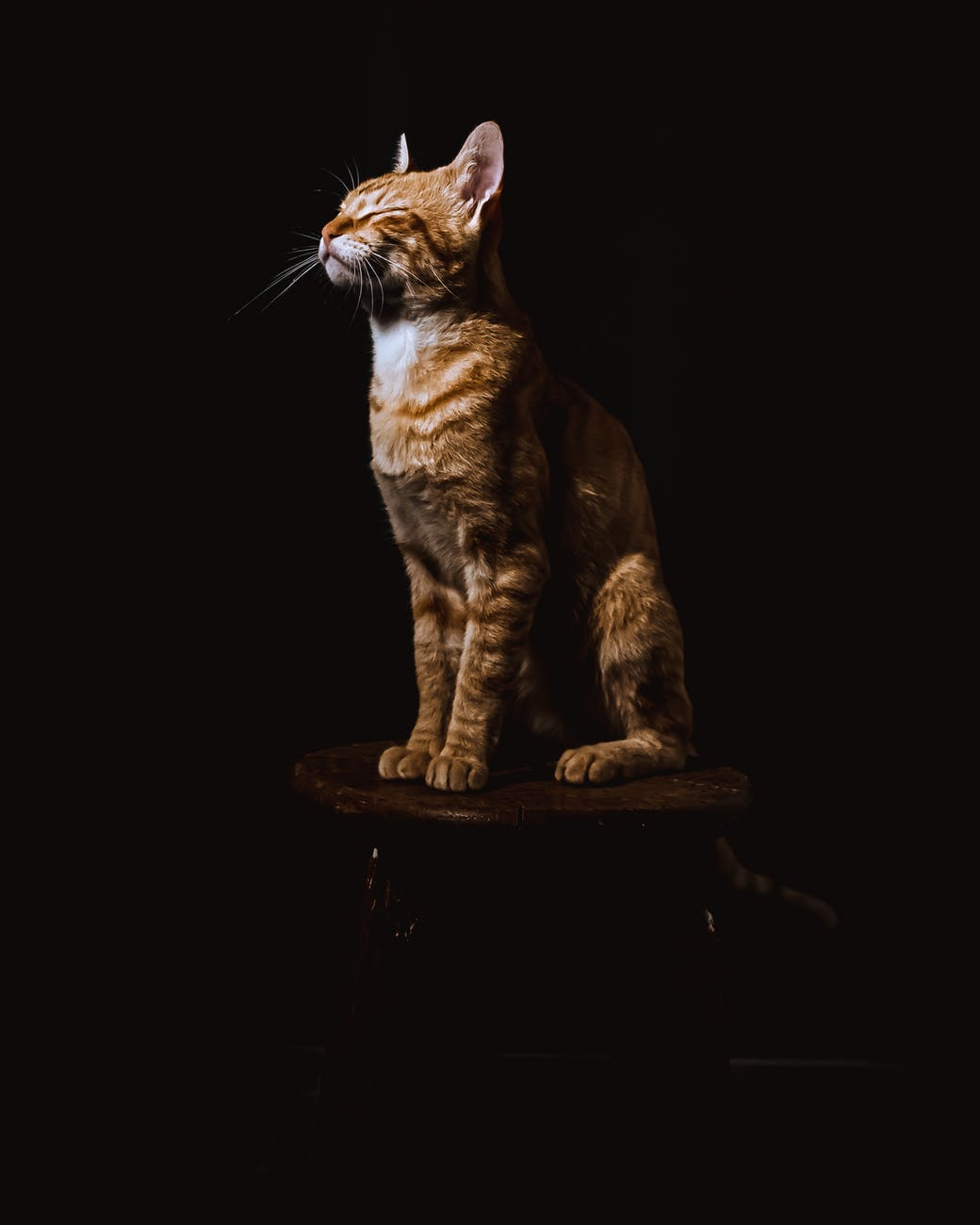 brown tabby cat sitting on brown wooden stool